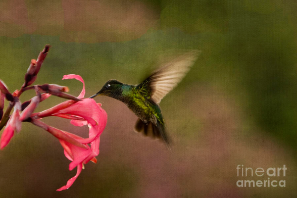 Wings in Motion by Anne Rodkin