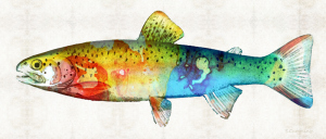 RainbowTroutFB