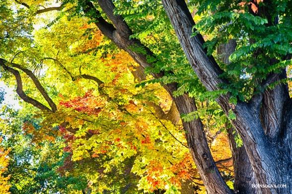 Autumn Season Leaves in Full Glory Photography Prints